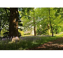 Bluebells at Lauriston Castle Photographic Print