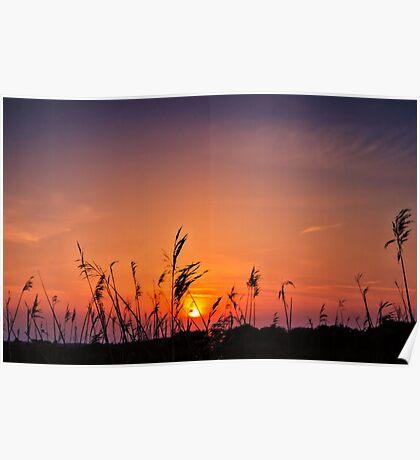 Marsh Sunset Poster