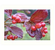 Raindrop Berries Art Print