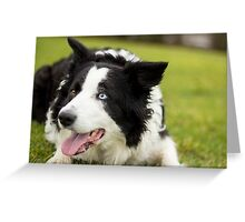 Lucy the Collie Greeting Card