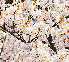 cherry blossom tree  by dirtyneon
