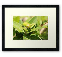 Green Beetle on a Leaf Framed Print