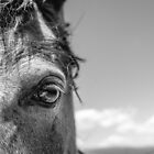 Horse Eye by Dfeivor