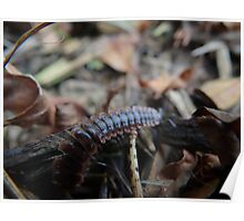 Creepy Crawly Poster
