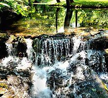 Waterfall Reflection by lorib