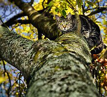 Little Leaf Eyes by kiwiniknak