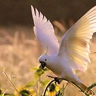 Early Morning Cockatoo by Trish Threlfall
