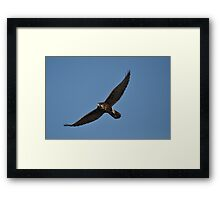 Brown Falcon Framed Print