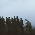 Trees by Hudolin