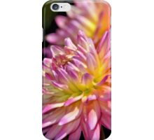 Pink dahlia flower iPhone Case/Skin