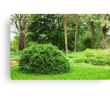 woodland scenery Canvas Print