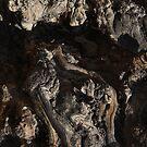 Wood Root Landscape 001 by IreKire