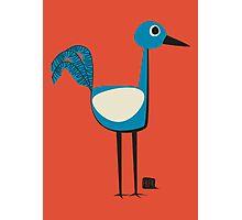 A Curious Bird Photographic Print