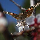 A Butterflys Brunch by IreKire