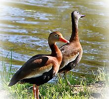 Black Bellied Whistling Ducks by DottieDees