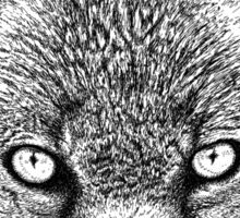 Fox Head Ink Drawing Sticker