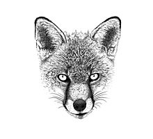 Fox Head Ink Drawing Photographic Print