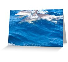 Common Dolphins - Bay of Fires Ecotour Greeting Card