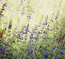 Wildflowers by Karen E Camilleri