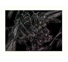 Cranberries Art Print