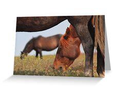 Below A Mustang Greeting Card
