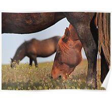 Below A Mustang Poster