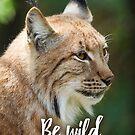 Be wild - Lynx by garigots