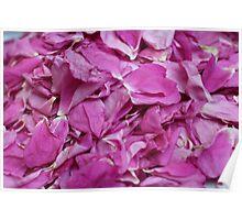falling petals red rose Poster