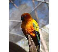 Yellow Wings Photographic Print