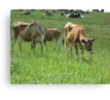 Cows in the outfield Canvas Print