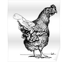 A chook called Travis Poster