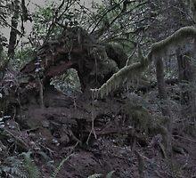 Creepy Forest by irishbarc