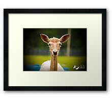 Eyebrows and Wiskers Framed Print