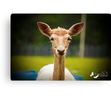 Eyebrows and Wiskers Canvas Print