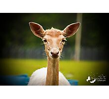 Eyebrows and Wiskers Photographic Print