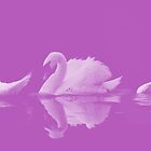 Swans by shalisa