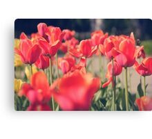 Red Tulips (Art Photo)  Canvas Print