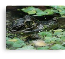 Green crocodile Canvas Print