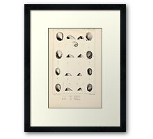 Proceedings of the Zoological Society of London 1848 - 1860 V5 Mollusca 025 Framed Print