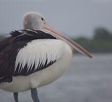 Pelican by soojie