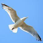 spread your wings.. by FotoBloke