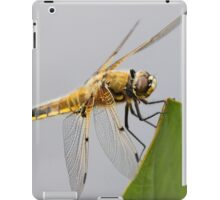 Four-spotted Chaser Dragonfly iPad Case/Skin