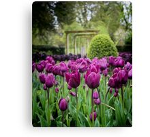 Spring Tulips Canvas Print