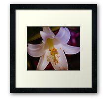 Vibrant Lily Framed Print