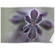 Purplefication Poster