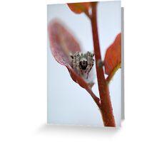 Spider Leaf Greeting Card