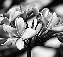 Frangipani Bouquet by Richard Snyder