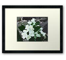 Jasmine flower Framed Print