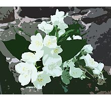 Jasmine flower Photographic Print