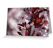 Japanese Cherry Tree (2) Greeting Card